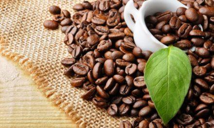 Полезните свойства на зеленото кафе