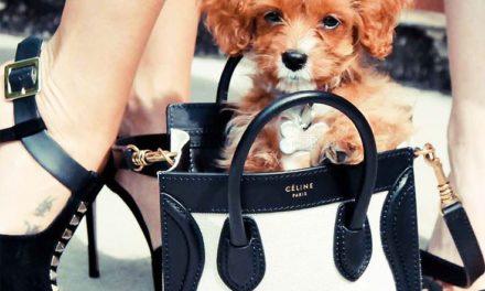 Moncler с модна колекция за кучета