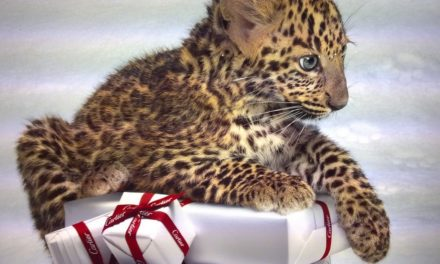 Луксозни изненади за Коледа