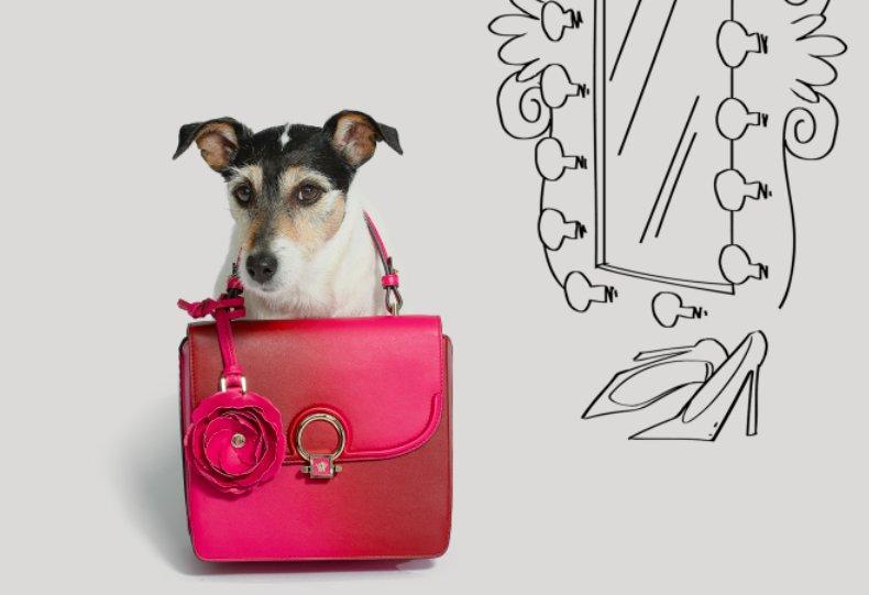 Breaking News: Кучето на Donatella Versace е рекламно лице на новата й колекция